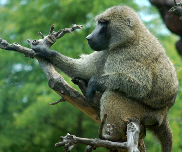 perkopolis  toronto zoo